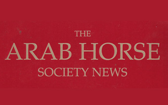 Arab_Horse