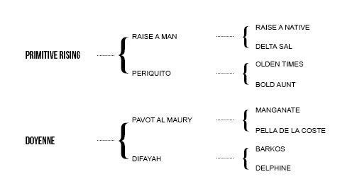 http://www.biddesdenstud.co.uk/wp-content/uploads/2013/05/persiflage-pedigree.jpg