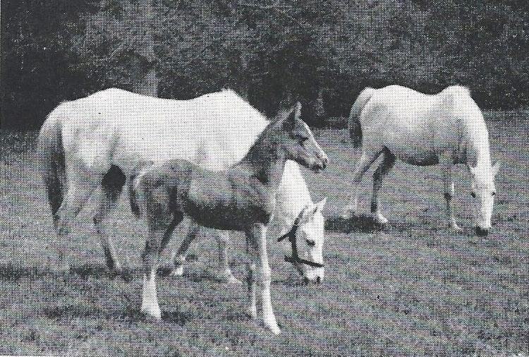 Dourak with dam Doonyah and Dafinetta