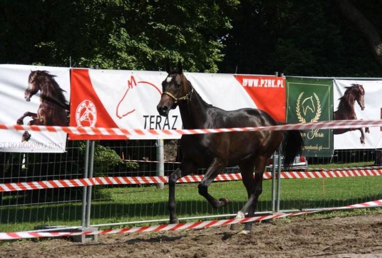 edam-gallop