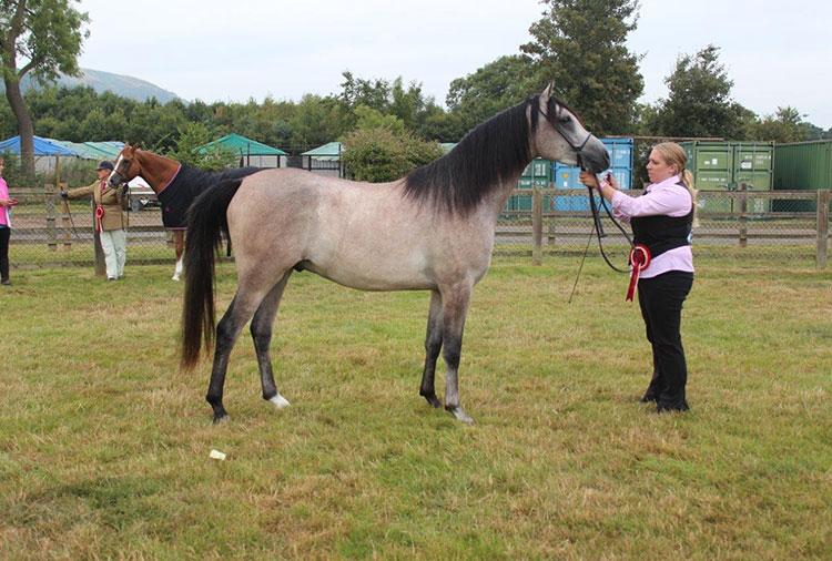 - Arab Horse Society National Show, July 2016