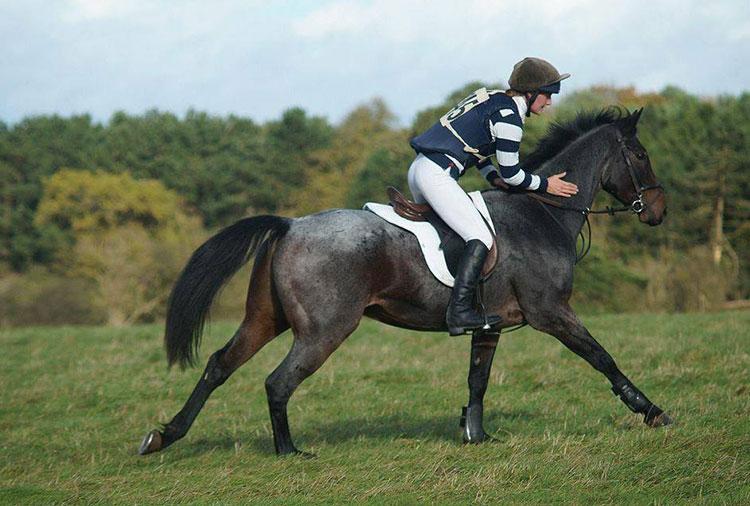 pompey-gallop