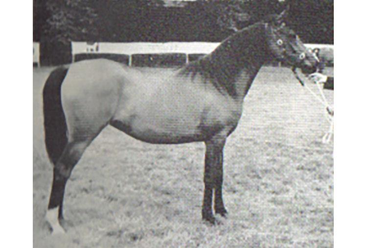 Banika-1969