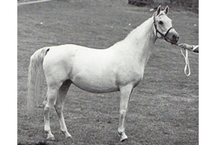 Baraka 1967