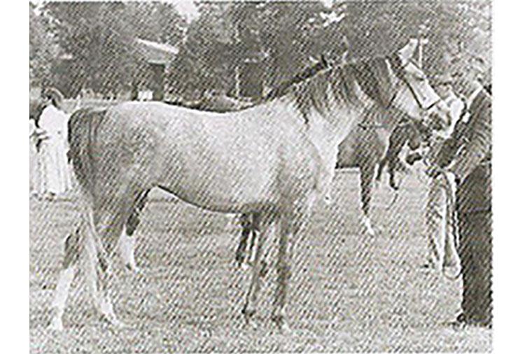 berardia-1987