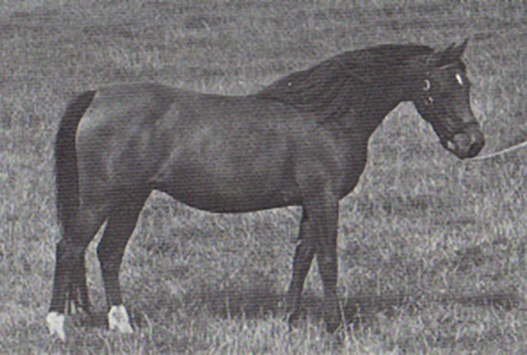calliope-1971