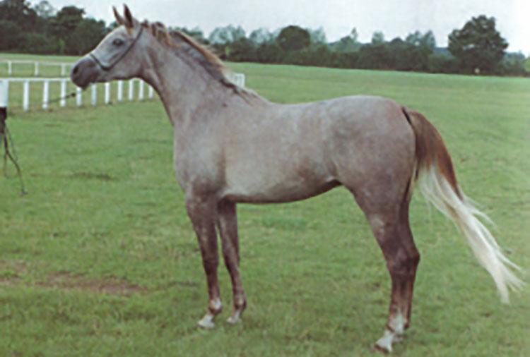 sidalcea-1992