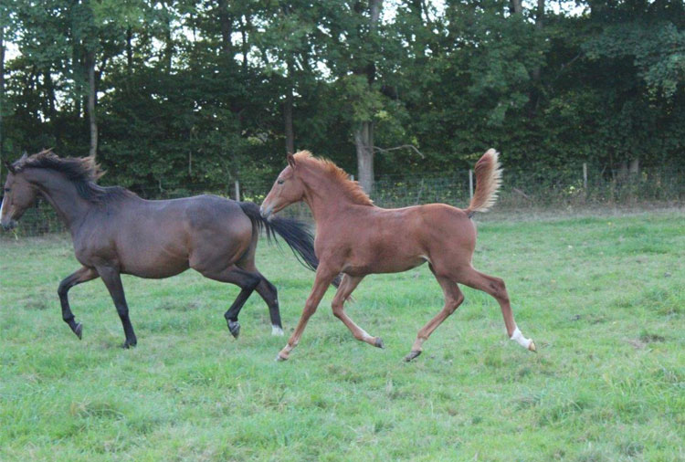 http://www.biddesdenstud.co.uk/wp-content/uploads/2016/07/pimpinella-sept2.jpg