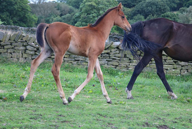 Filly x Syringa