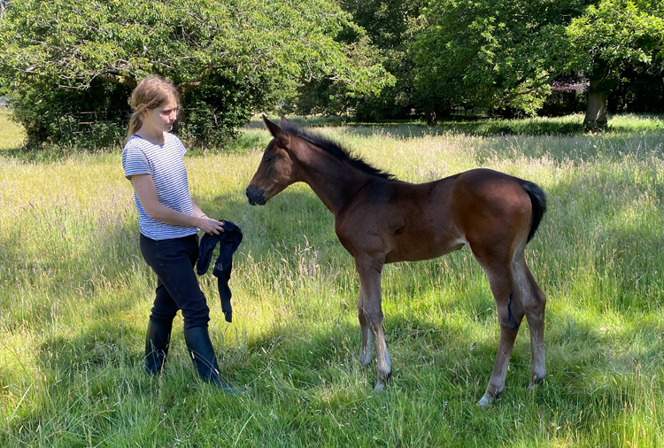 http://www.biddesdenstud.co.uk/wp-content/uploads/2020/06/incognitopersephonefoal20.jpg